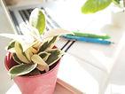 植物のOEM企画 打合せ