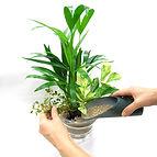観葉植物の実演
