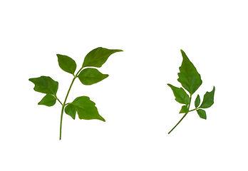 観葉植物 葉が小さくなった