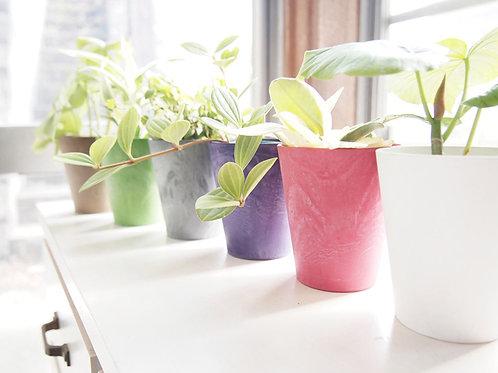 アースストーンラウンド カラー 植物セット