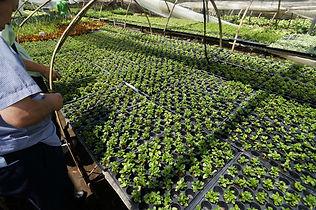 海外の観葉植物農場 3