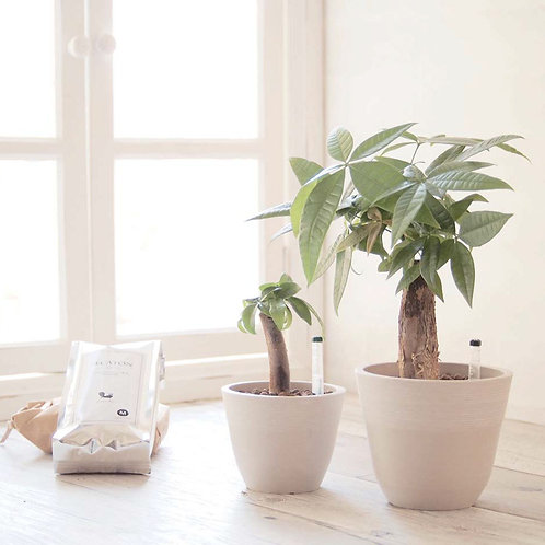 ストーンウッドポット 植物セット