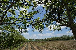 海外の観葉植物農場 2