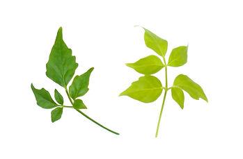 観葉植物 葉の色
