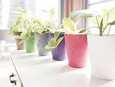 観葉植物 OEM