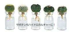 グリーンヒーリングボトルS 品種一例 - コピー