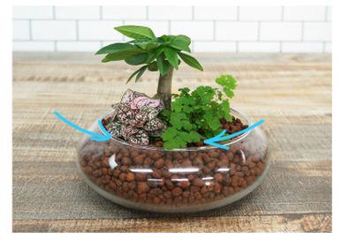 ハイドロカルチャー きれいな寄せ植え