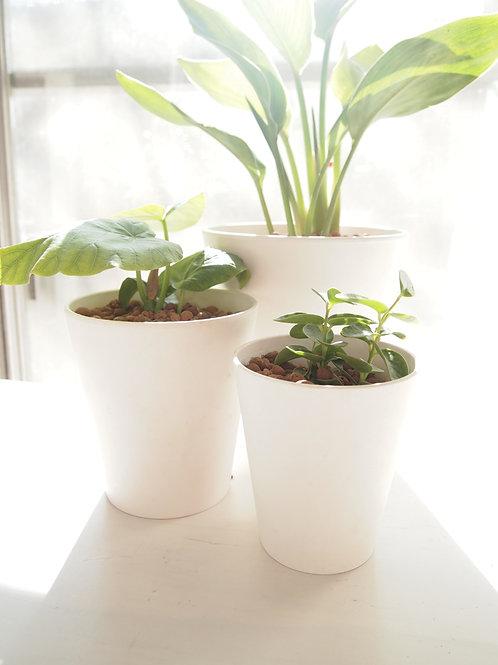 アートストーンラウンド 植物セット