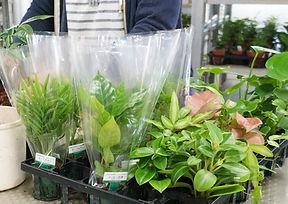 観葉植物の包装