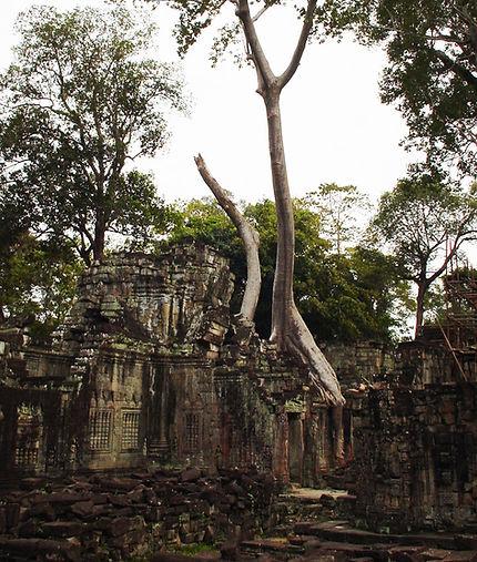 ガジュマル カンボジア