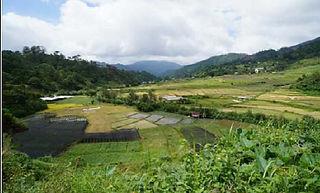 海外の観葉植物農場 1