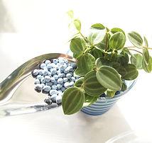 ハイドロカルチャー 観葉植物 植え込み