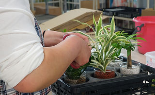 観葉植物(ハイドロカルチャー)のガラス植えこみ
