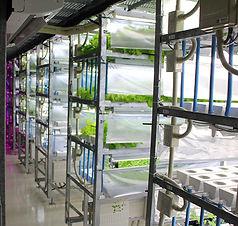 ハイドロカルチャー 植物工場