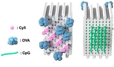 dna vaccine cancer origami nanotechnology