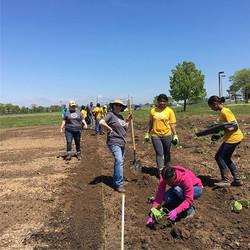 Planting squash at Vincent HS