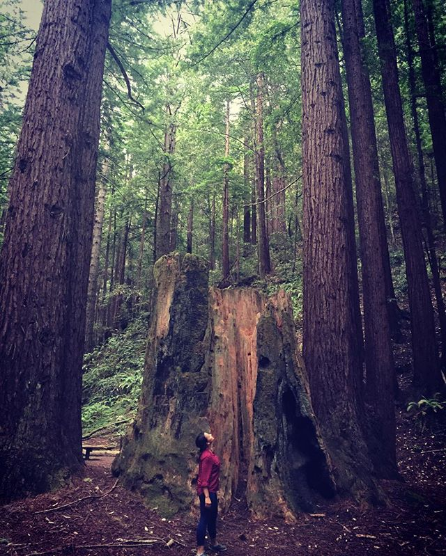 #perspective #redwoods #california #thesca