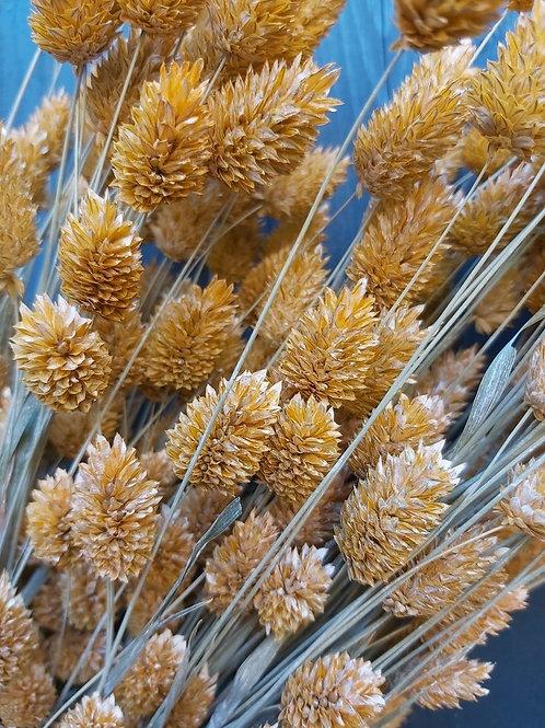Dry Flowers Brown