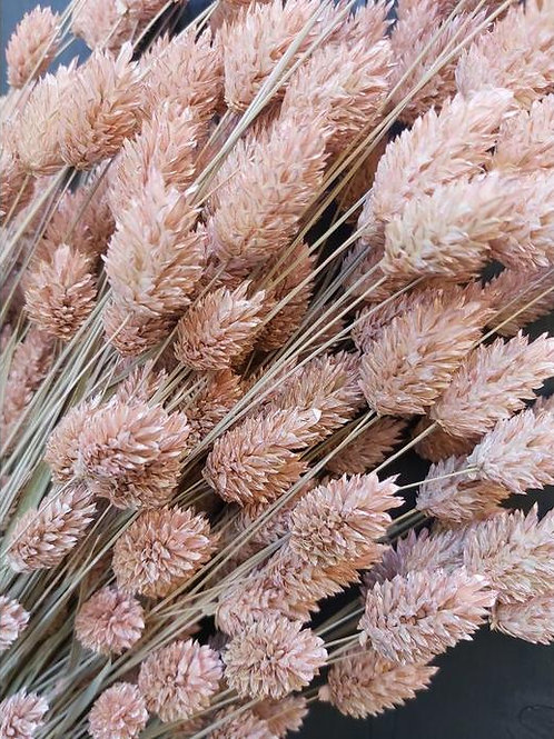Dry Flowers Pink