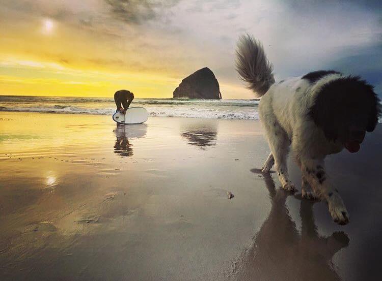 Oregon Coast rentals pet friendly