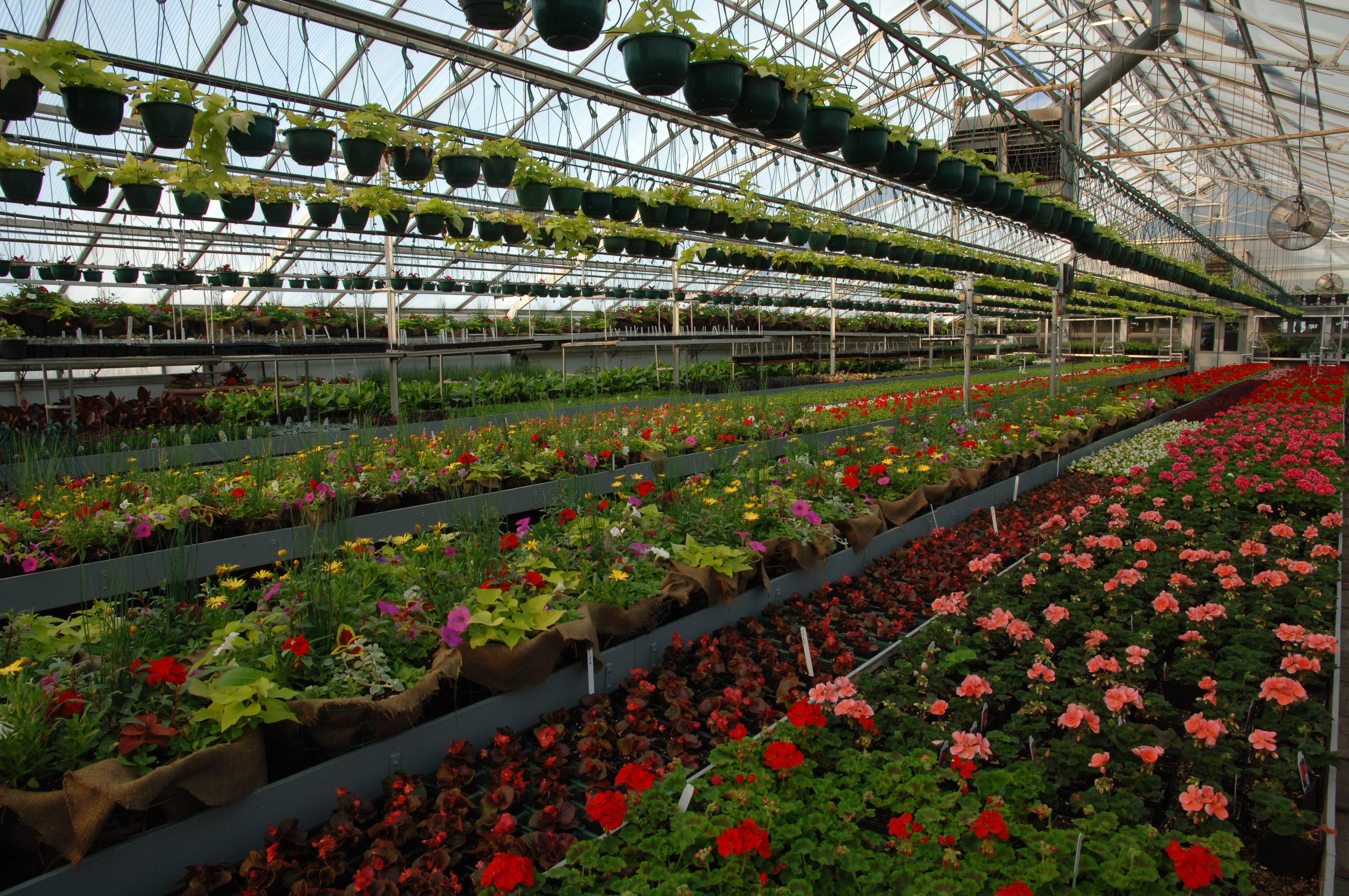 Side Interior of Greenhouse