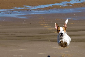 Pet friendly rentals, Oregon coast
