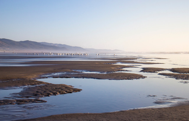 Guest Post: Manzanita - A Photographer's Viewpoint