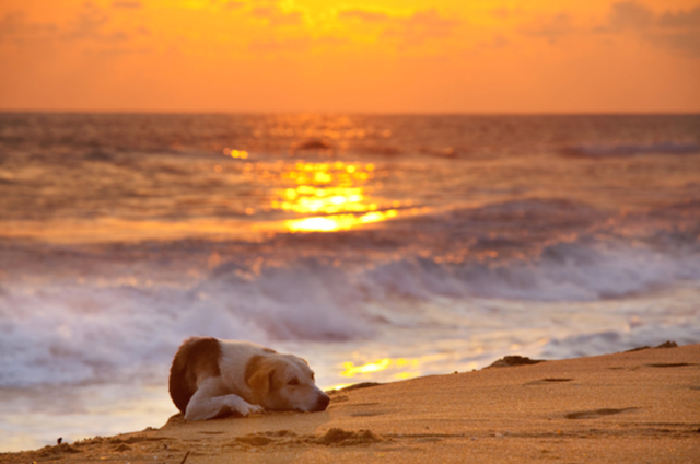 Oregon coast pet friendly rentals