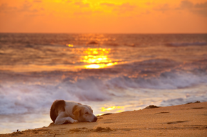 Oregon coast pet friendly rentals