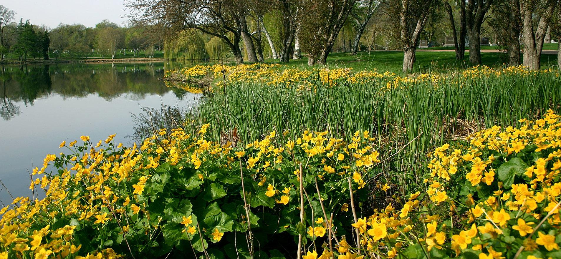 ... Lakewood Cemetery Lake ...