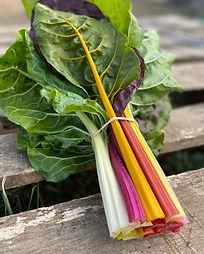 fullswingfarm kale.jpg