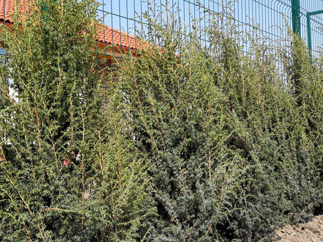 Озеленение и благоустройство территории возле частого дома