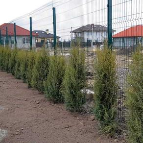 Приступили к озеленению придомовых территорий