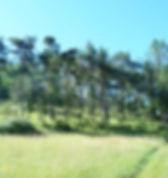 ecovillage 2.jpg