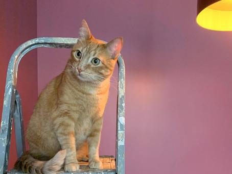 Vamos reformar a casa, o que fazer com o gato?