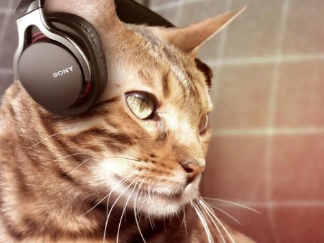 Como proteger seu gato do barulho dos fogos?