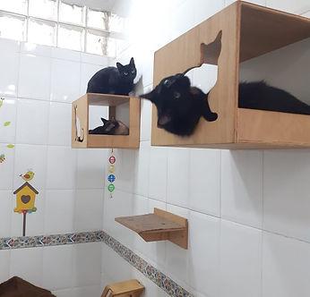 Toca dos Gatos2.jpeg