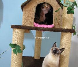 Patrulha - Meg e Frederico.jpeg