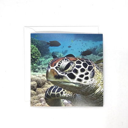 Conservation Cards by Lee Hankinson, 6 pack