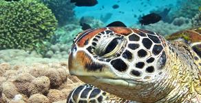 Identifying Turtles