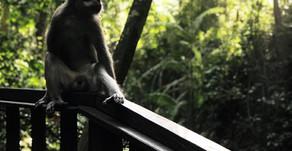 Monkey Forest Ubud: Staying Safe & Ethical Whilst Exploring
