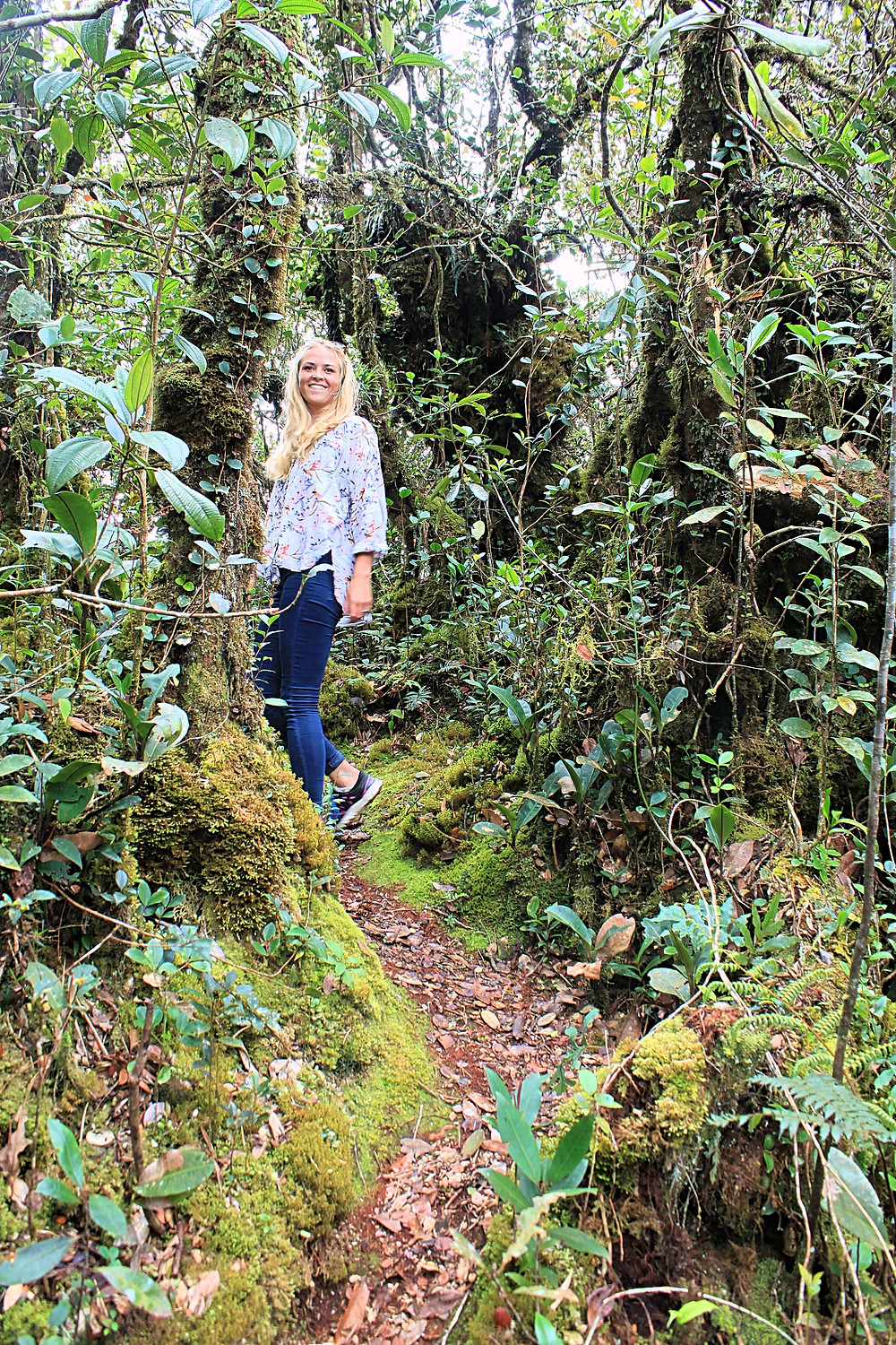 Hiking in the Mossy Forest, Cameron Highlands.