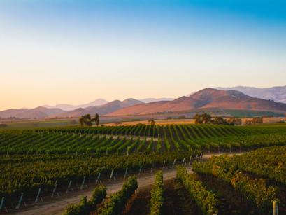 Wine tasting in Santa Ynez Valley, California