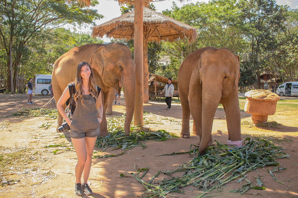 Volunteer at Elephant Nature Park Thailand