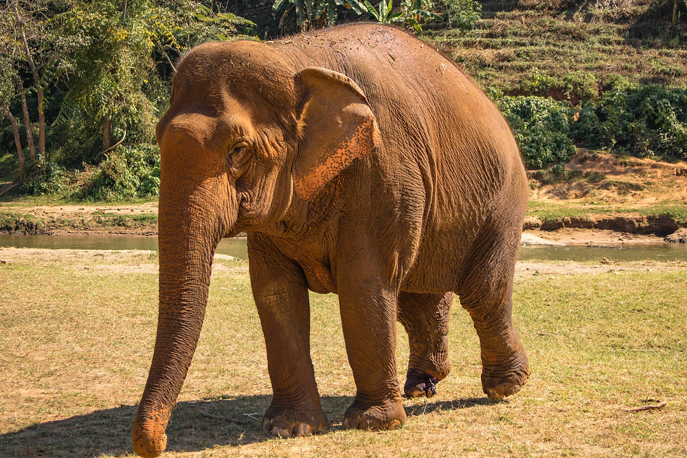 Volunteering at Elephant Nature Park Thailand