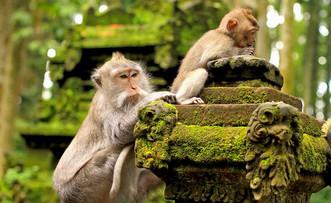 1465200091_Sangeh-Monkey-Forest.jpg.jpg