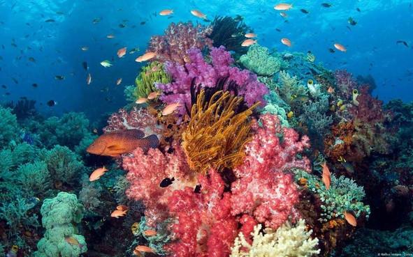 gili-mimpang-spot-plongee-sous-marine-ba