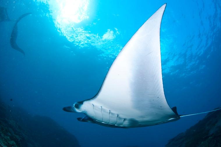 sejour-plongee-snorkeling-indonesie-bali