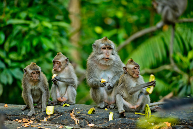 bali_ubud_monkey_forest.jpg