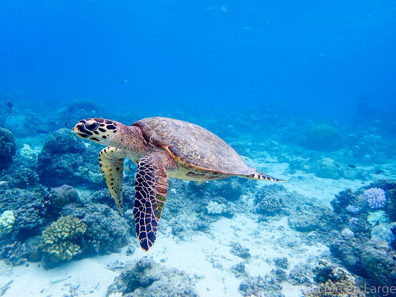 Snorkeling-Gili-Meno-P5160347.jpg